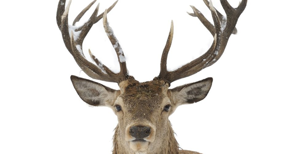 Is Hunting Legal in the USA: The Things You Need to Know
