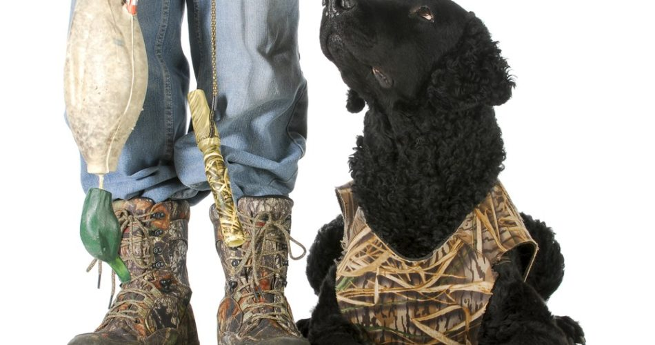 Top reasons your hunting dog needs to wear a vest