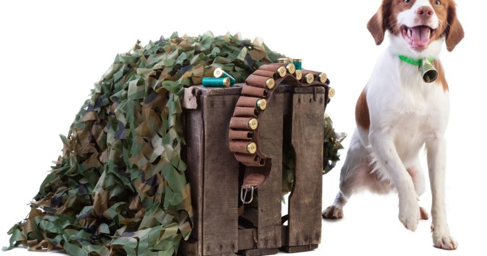 Top reasons your hunting dog should wear a bell